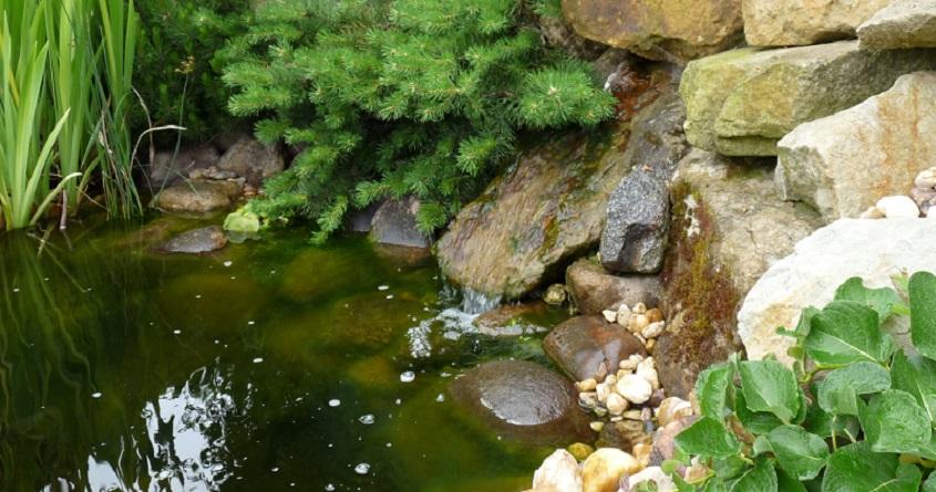 Řasy v zahradním jezírku
