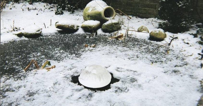 Ochrana jezírkových ryb v zimě